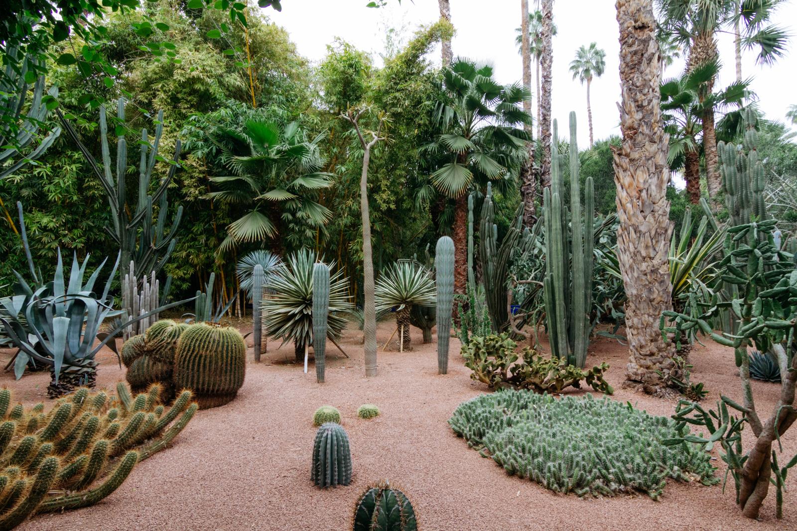 marrakechs majorelle gardens - Majorelle Garden