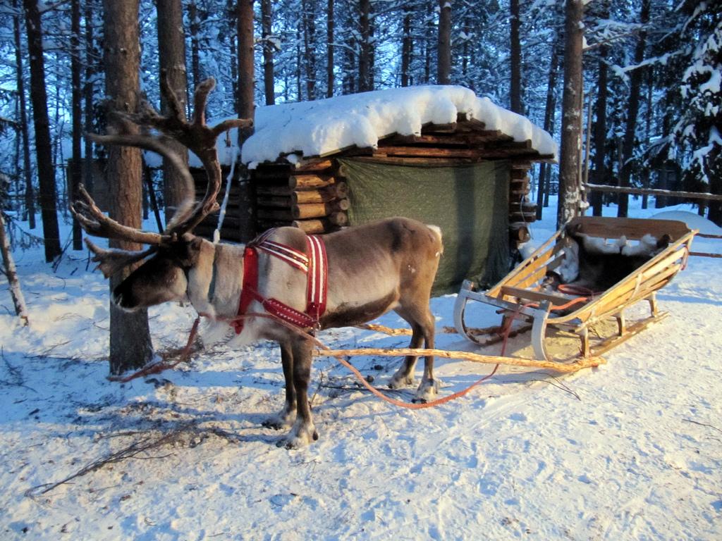 Reindeer Sleigh © Heather Sunderland/Flickr