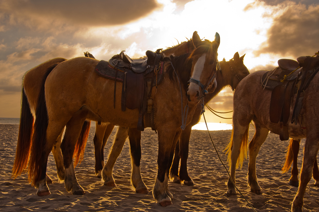 Horsing around on Rosarito Beach | ©John Liu/Flickr