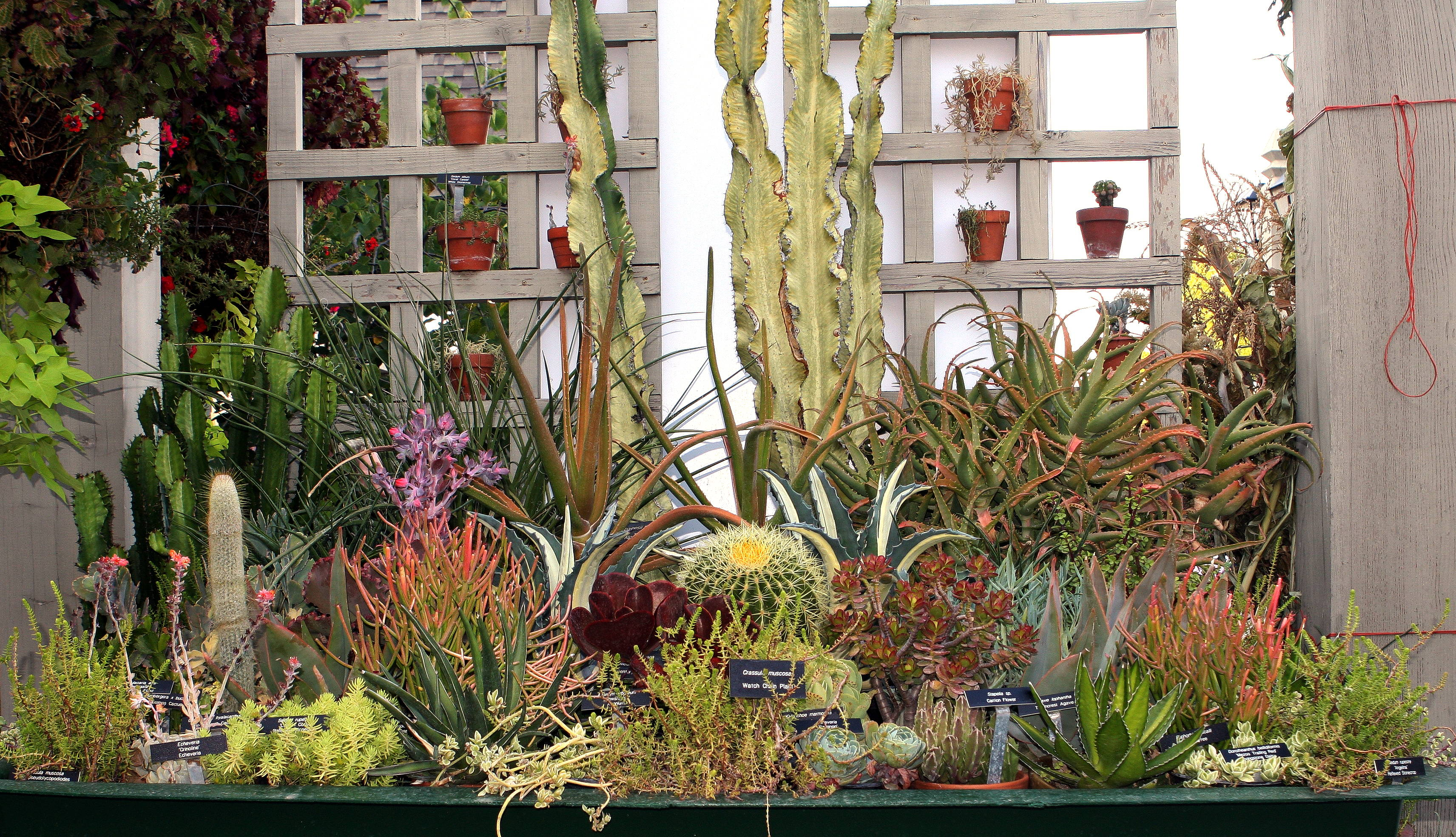A collection of cultivated succulent plants | © Hardyplants / WikiCommons