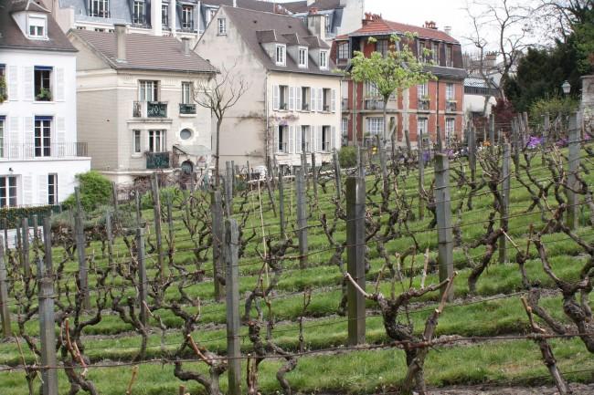 Vineyard, Montmartre  © Tanya Hart/Flickr