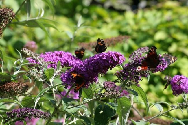 Butterfly Garden | © WimJongegan/Pixabay