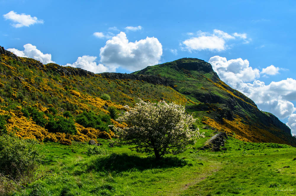 Arthur's Seat | © City.and.Color/Flickr