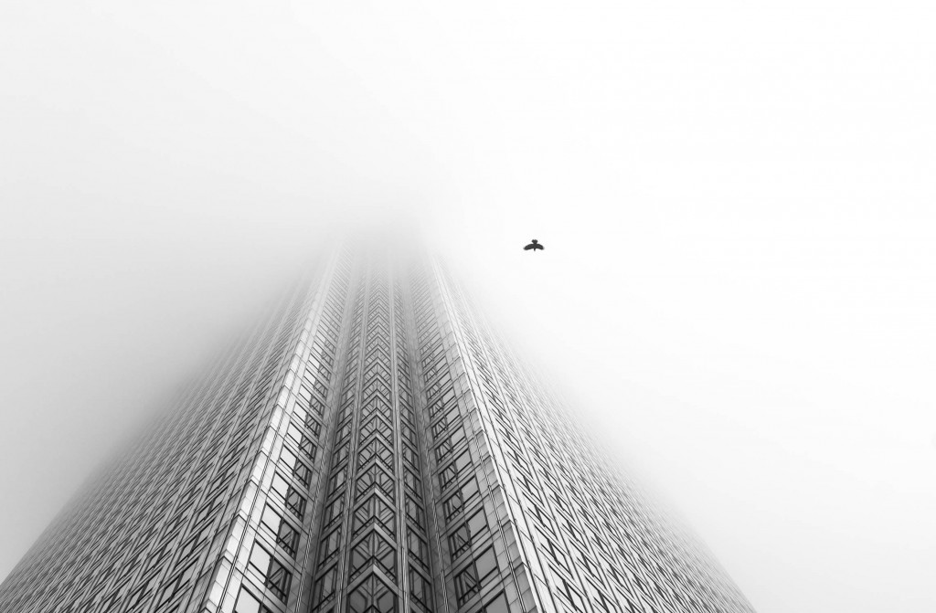 Free Bird | © Chaitanya Deshpande BPWA Awards