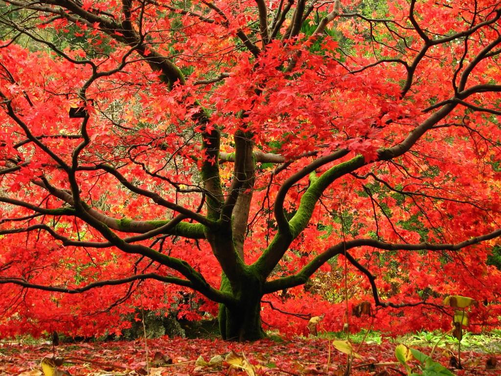 Benmore Gardens, Argyll And Bute   © kloniwotski/Flickr