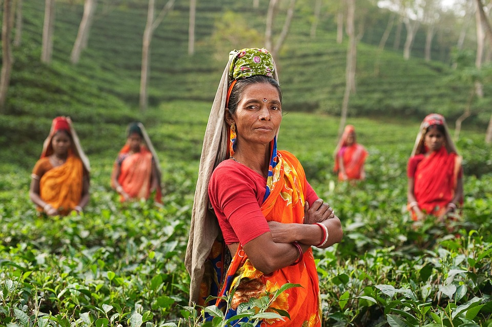 Tea plantation | Via Pixabay