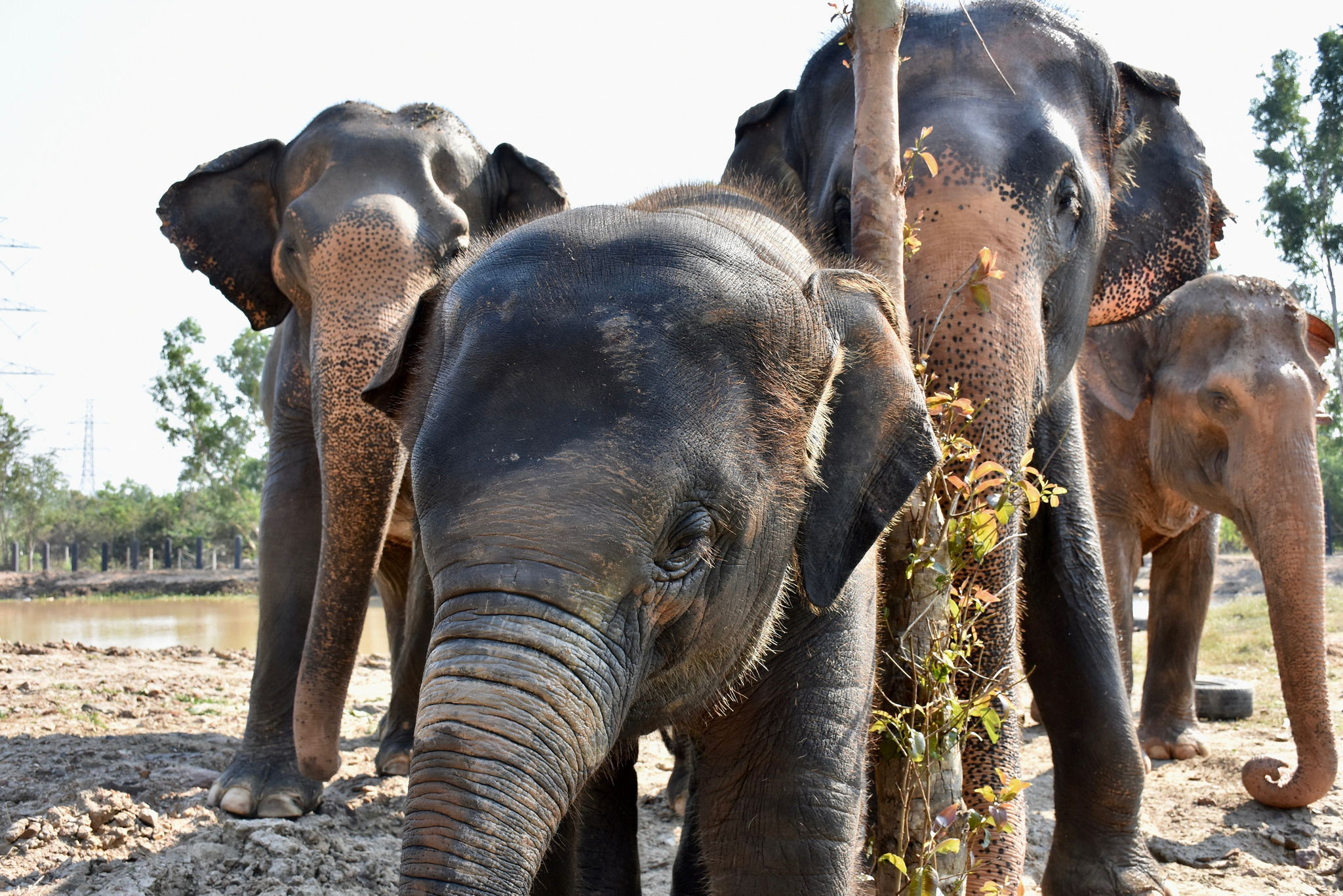 Ethical Animal Sanctuaries in Thailand You Can Feel Good
