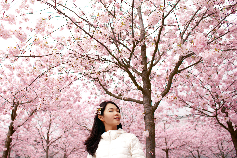 Cherry blossoms site