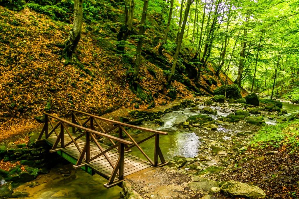 Forest walk in Bulgaria   © Pixabay