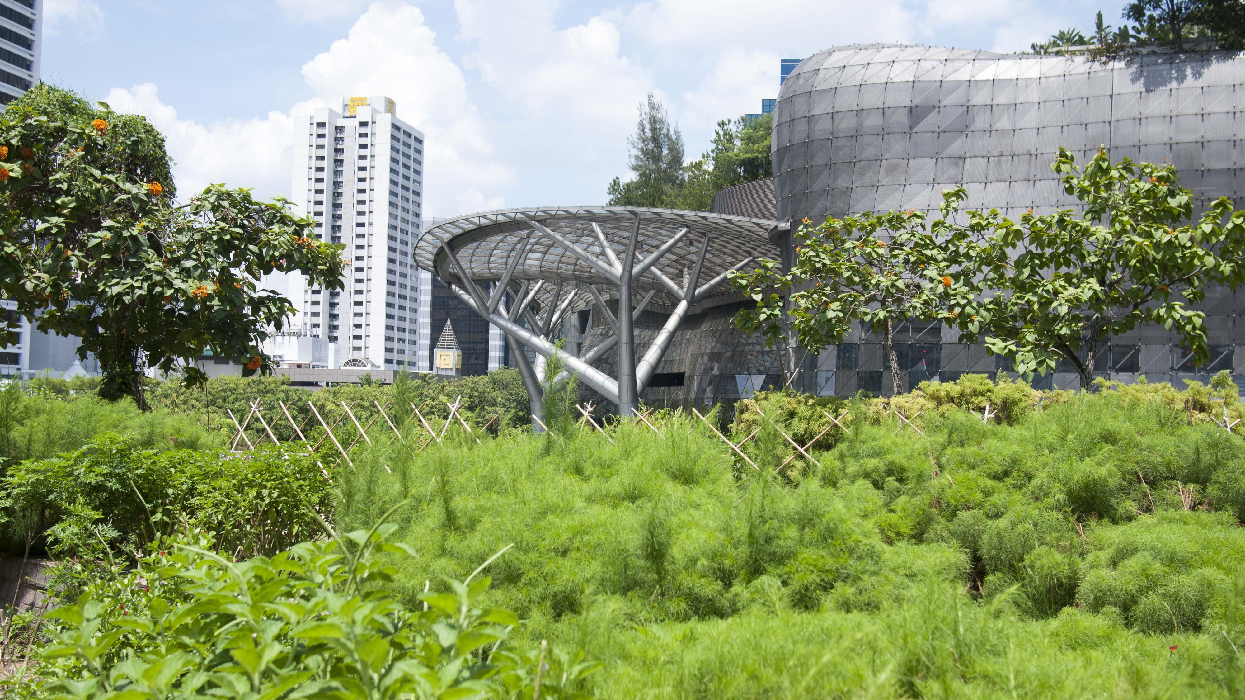 Step Into The Future Of Gardening At Singapore S Edible Garden City