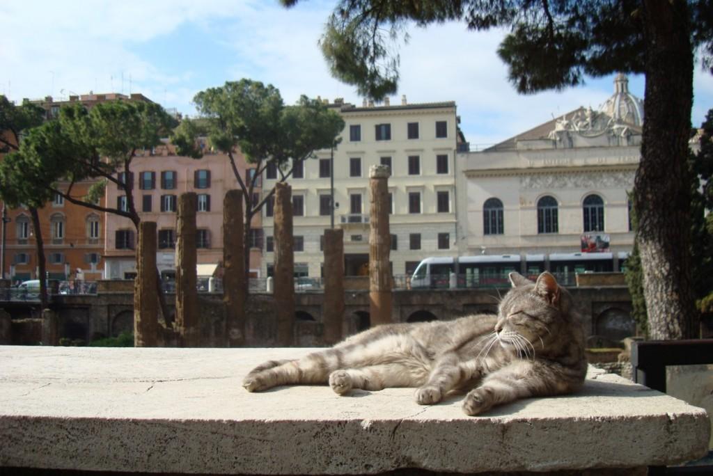 Cat at the sanctuary | © miriszlaibogi/Flickr https://www.flickr.com/photos/miriszlaibogi/3318708931/