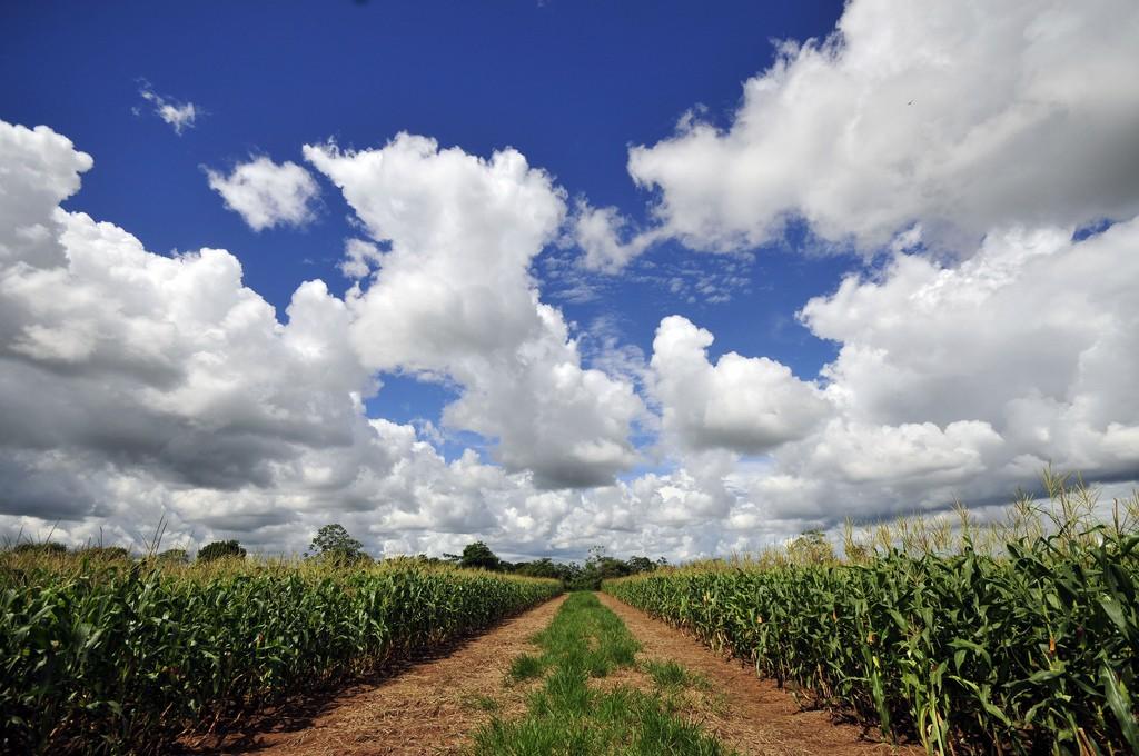 "<a href=""https://c1.staticflickr.com/6/5314/5853382745_97b44dc506_b.jpg"">Los Llanos Colombia | © CIAT/Flickr</a>"