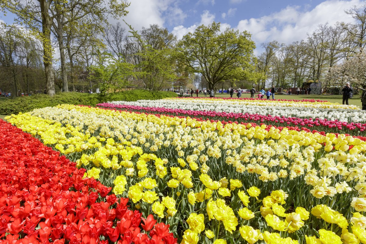 The best places to see tulips in the netherlands izmirmasajfo