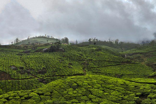 A cloudy sky over tea fields in the Western Ghats, Kerala | © Jakub Michankow/Flickr