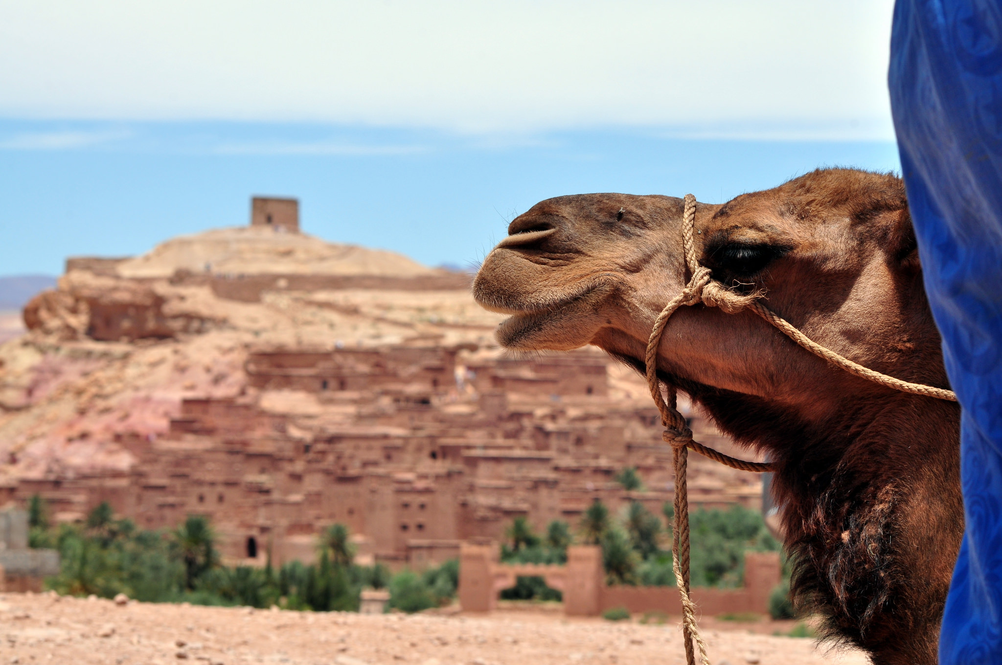 10 Top Guided Tours to Take in Marrakech