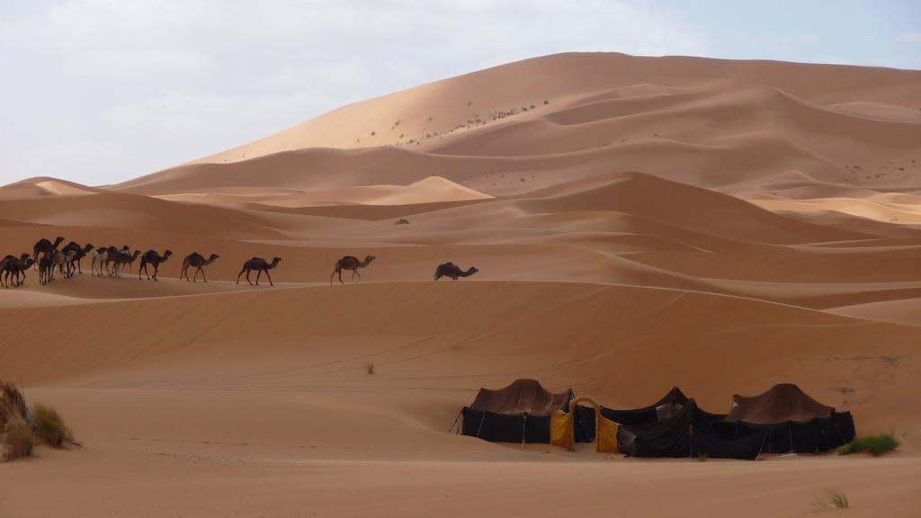 Camels and Berber camp