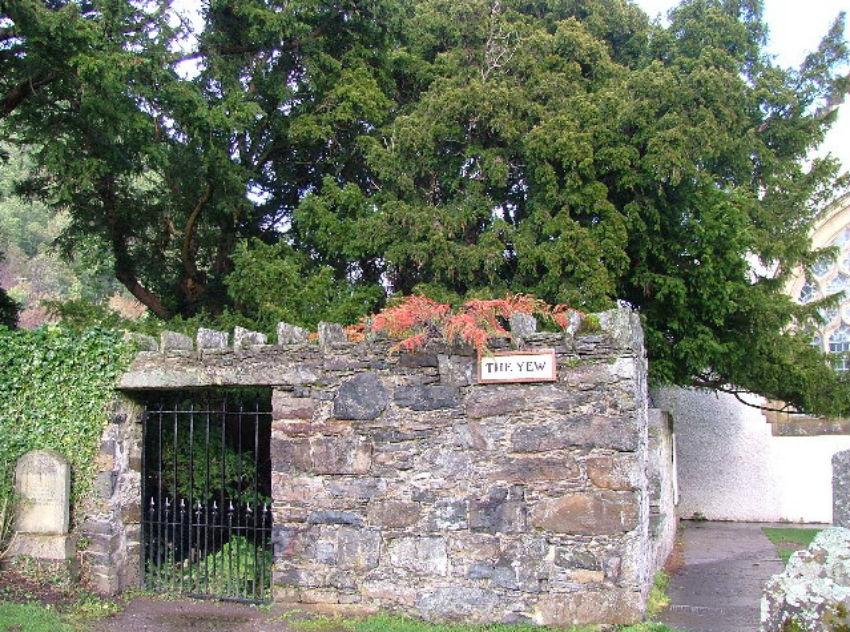 Fortingall Yew, Scotland
