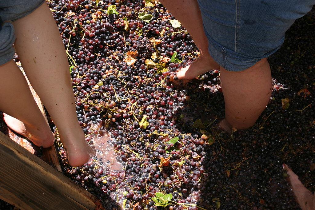 https://commons.wikimedia.org/wiki/File:Grape_Stomping_-_Pigeage.jpg