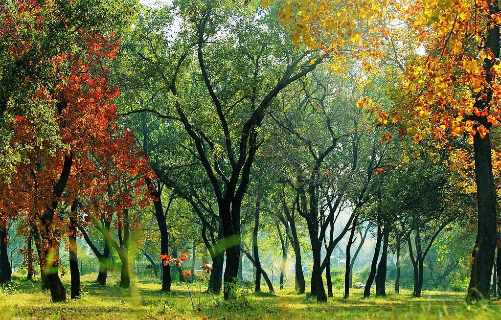 11 Reasons Why You Should Visit Islamabad, Pakistan's