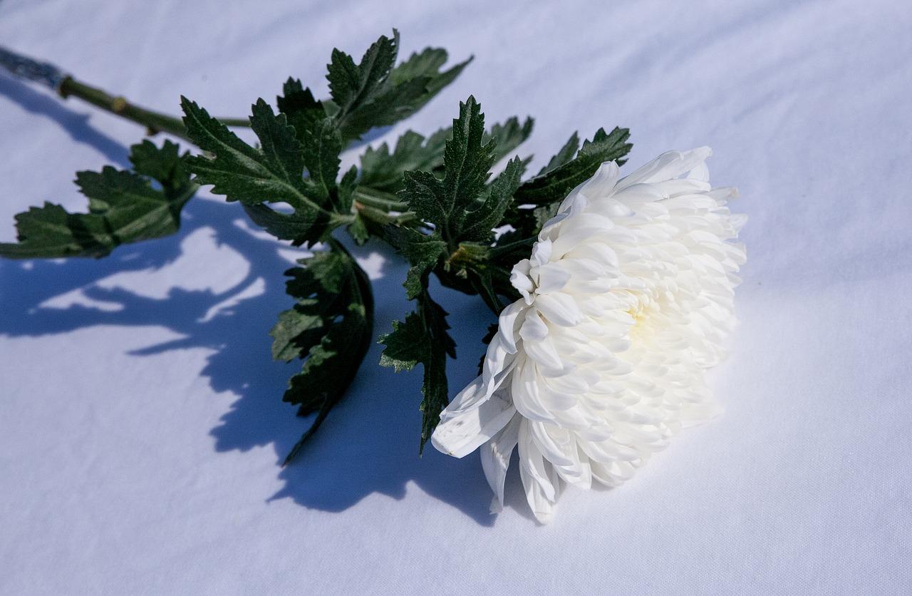 Hanakotoba the secret meanings behind 9 flowers in japan izmirmasajfo