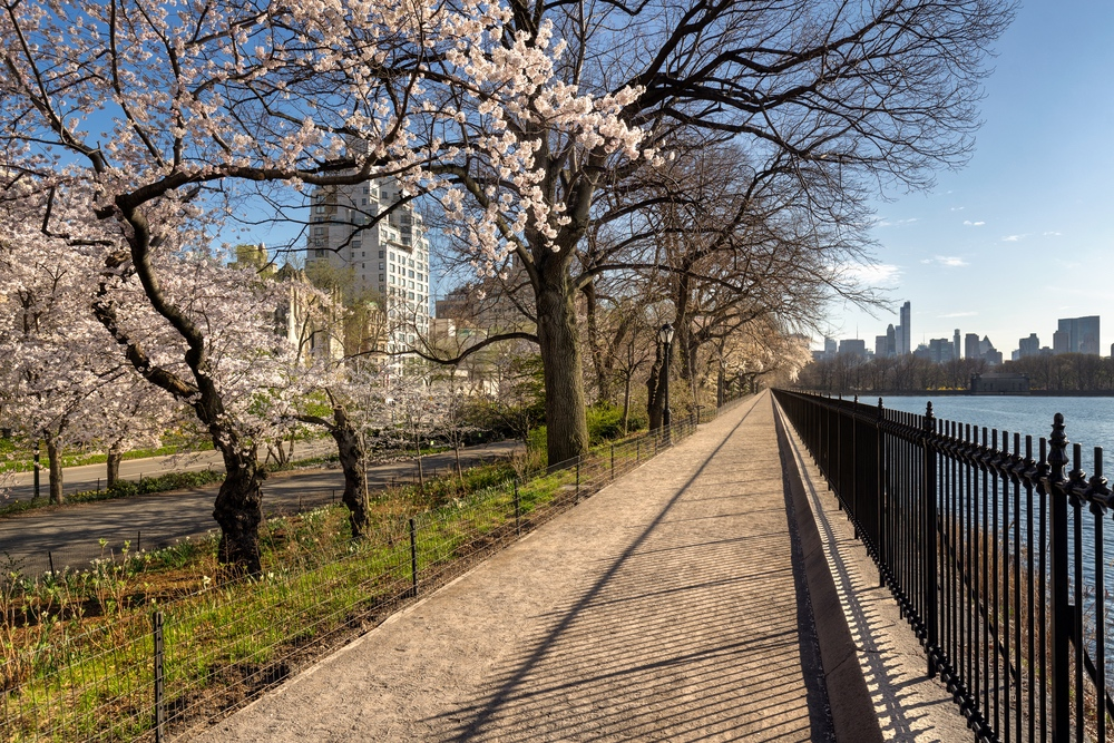 Cherry trees on the UES   © Francois Roux/Shutterstock