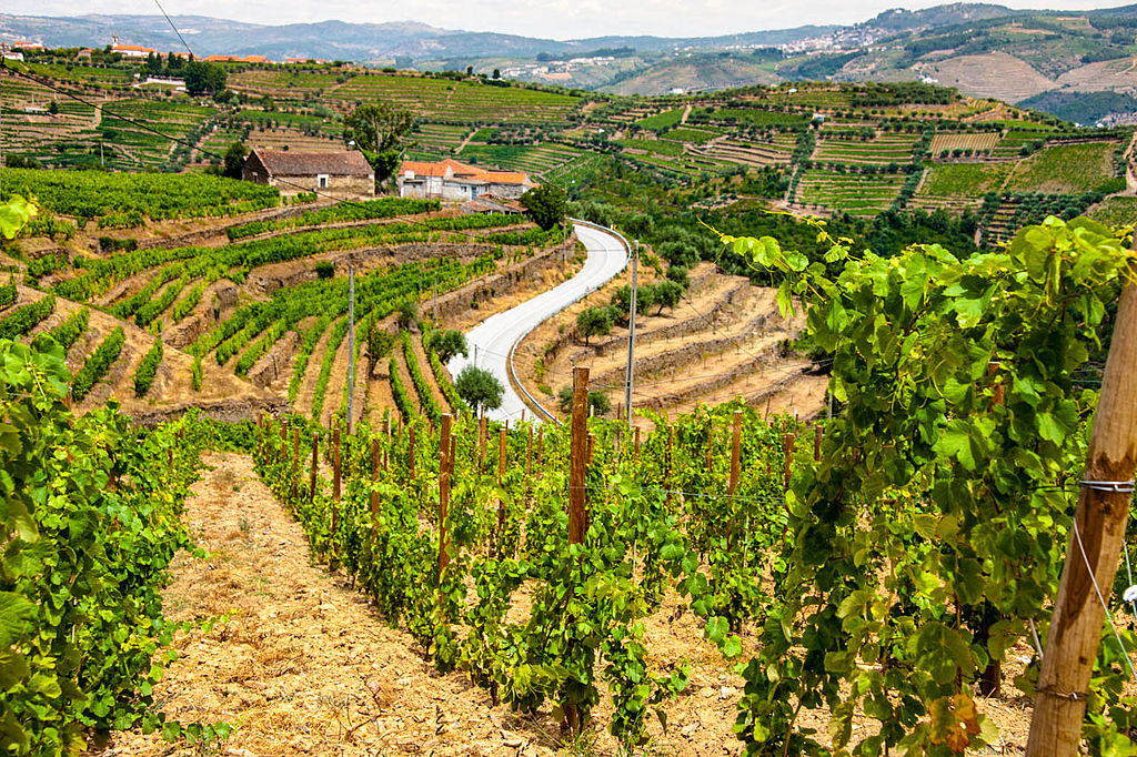 https://commons.wikimedia.org/wiki/File:View_of_vineyards_in_The_Douro_Valley.jpg