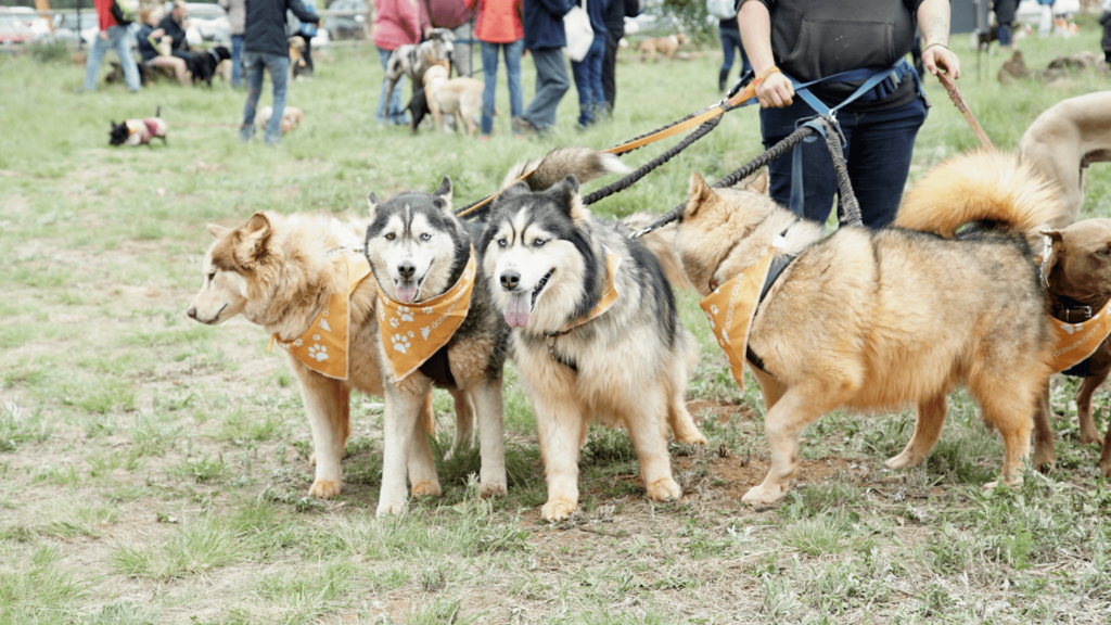 Guiness World Record South Africa_dogs