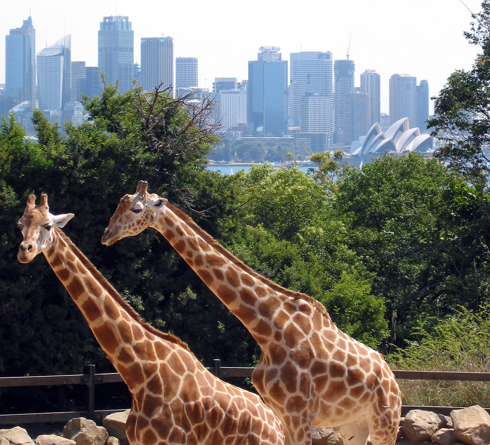 Taronga Zoo | © Jan Derk_Wikimedia Commons
