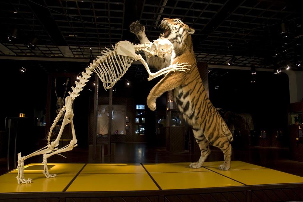 Tigerkamp