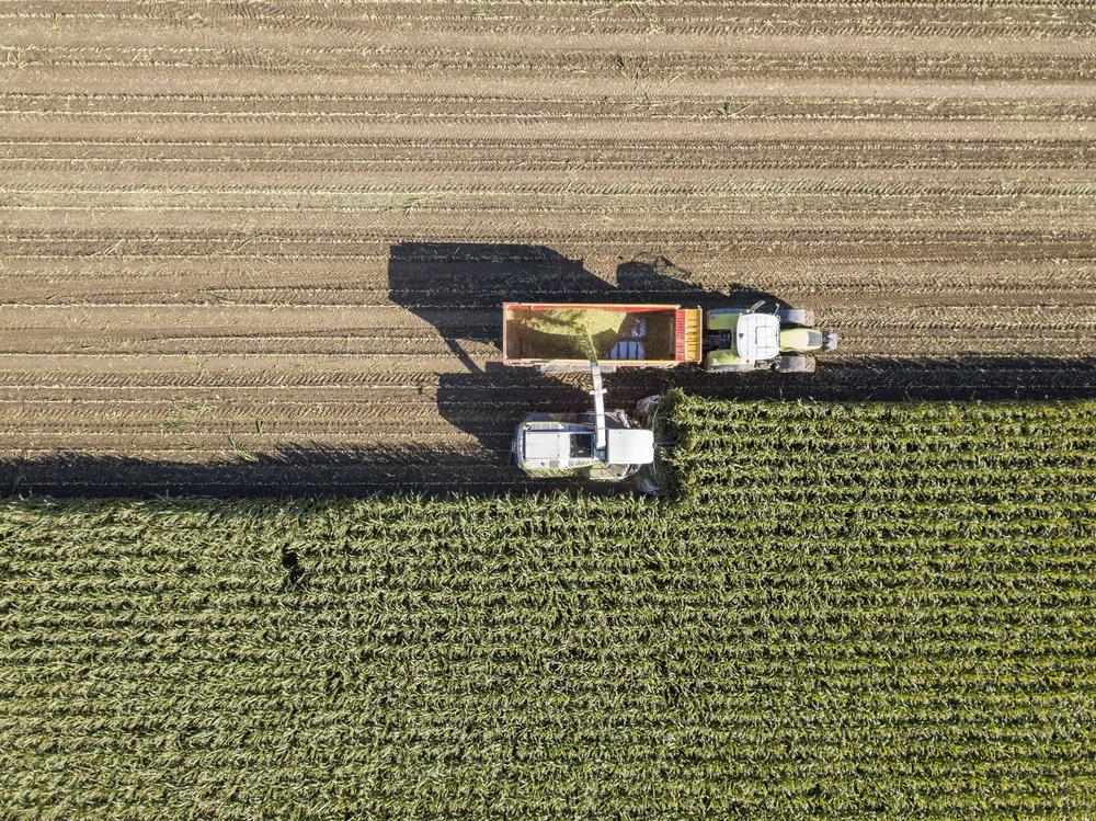 Machines harvesting corn   ©Philip Lange/Shutterstock
