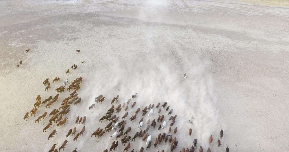 Herd of horses, Turkey   © fatir29/Shutterstock
