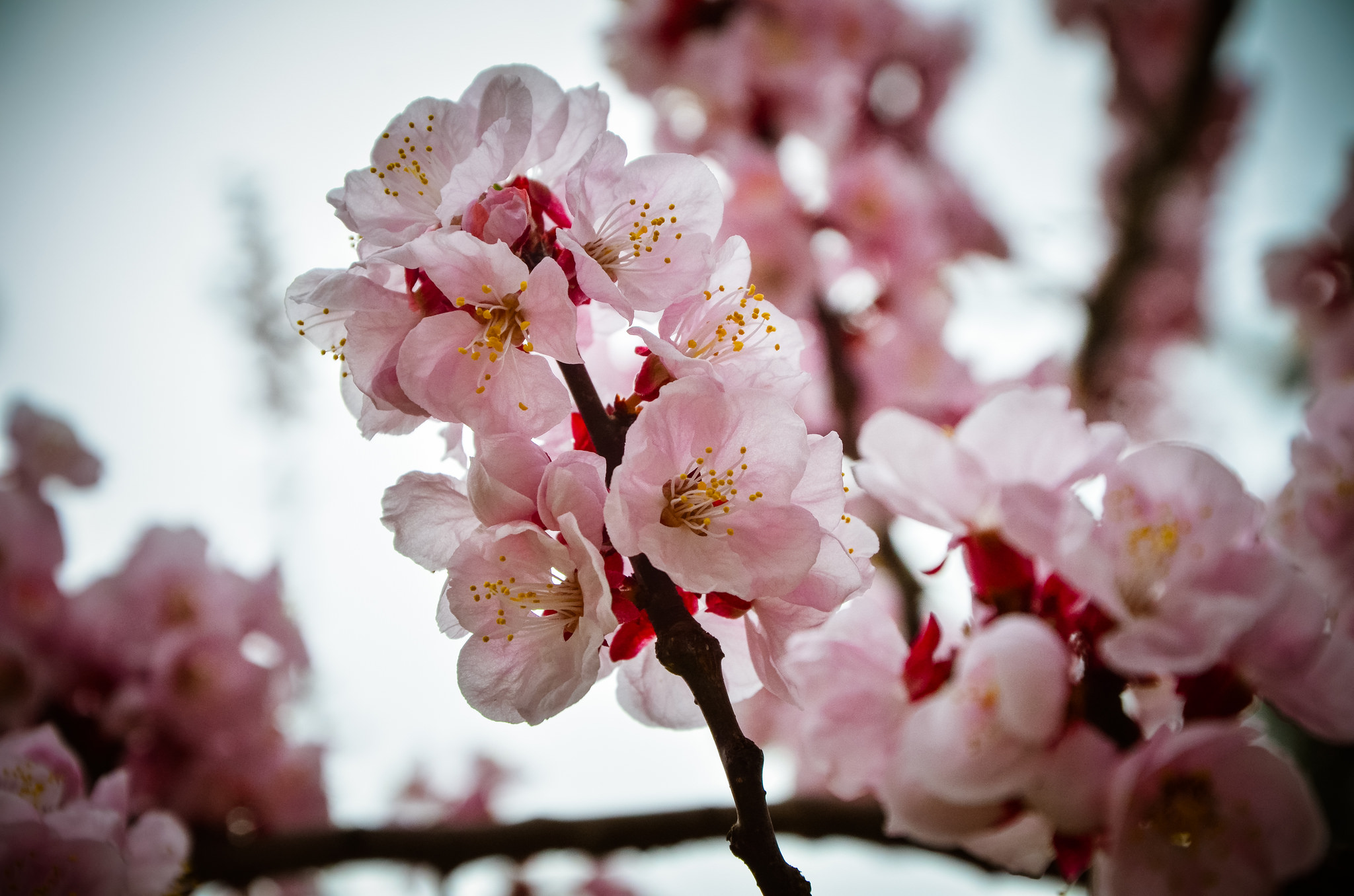 The Best Places To See Cherry Blossoms In Busan