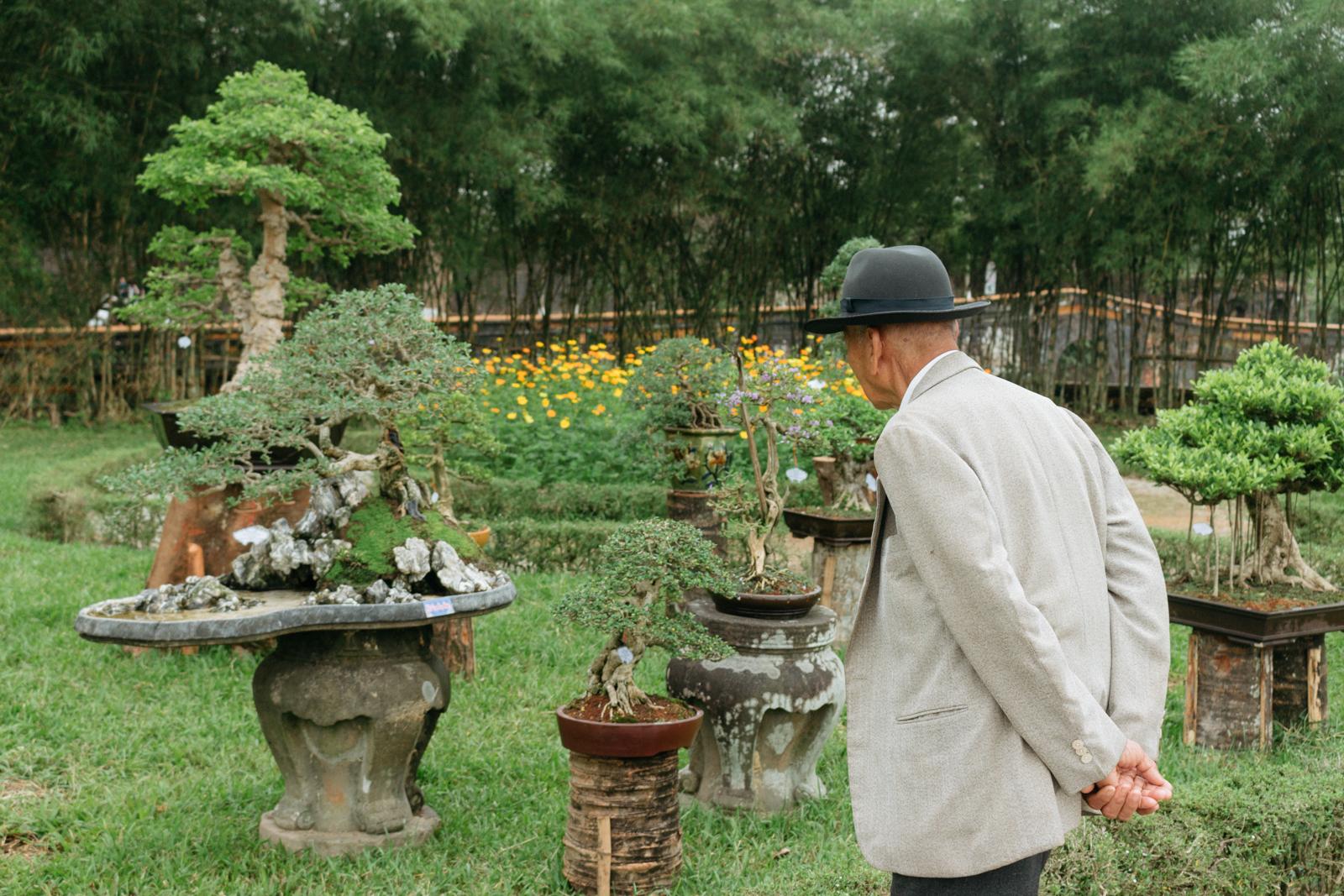Vietnam S Tradition Of Beautiful Bonsai Tree Art