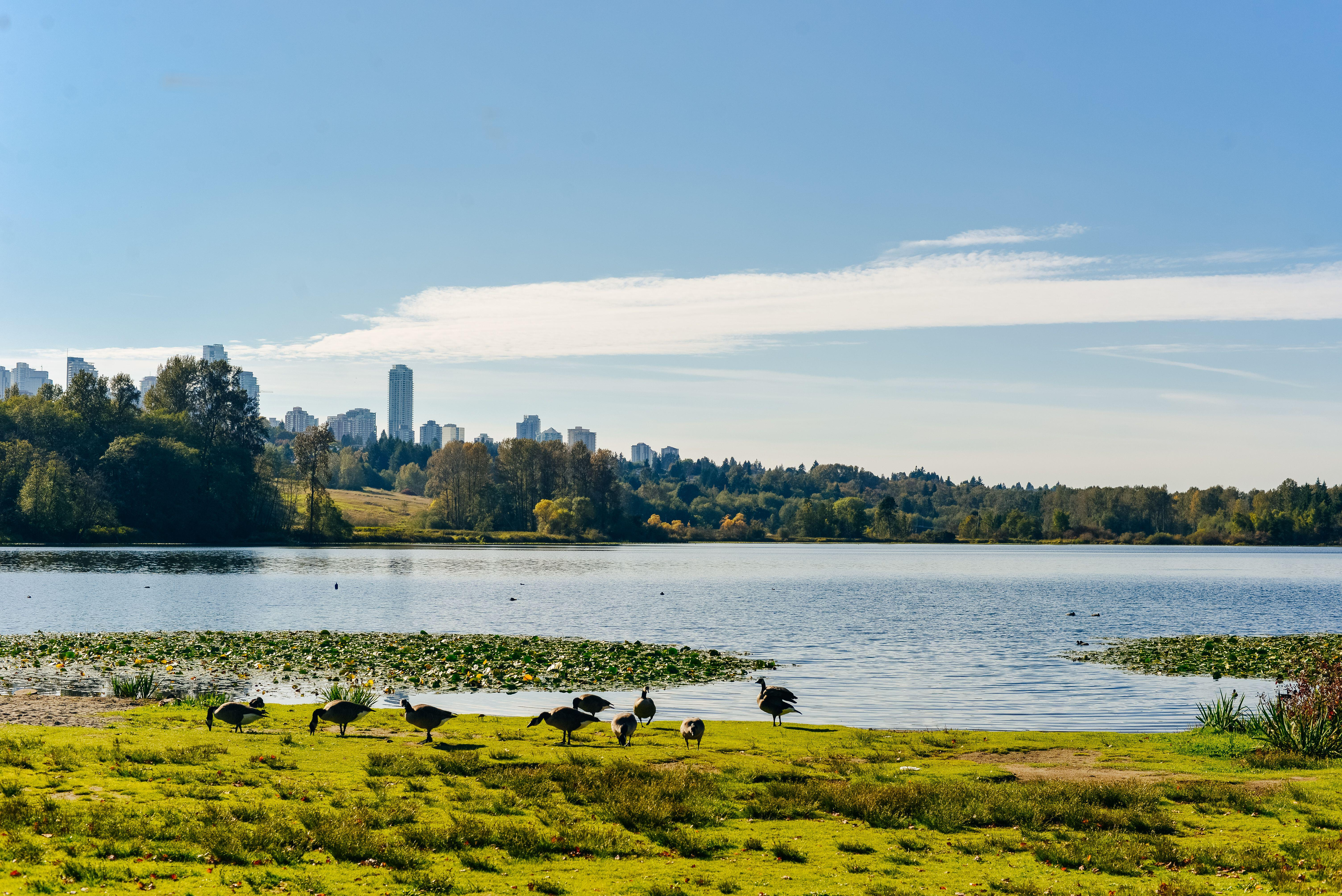 Great Things To See And Do In Burnaby British Columbia